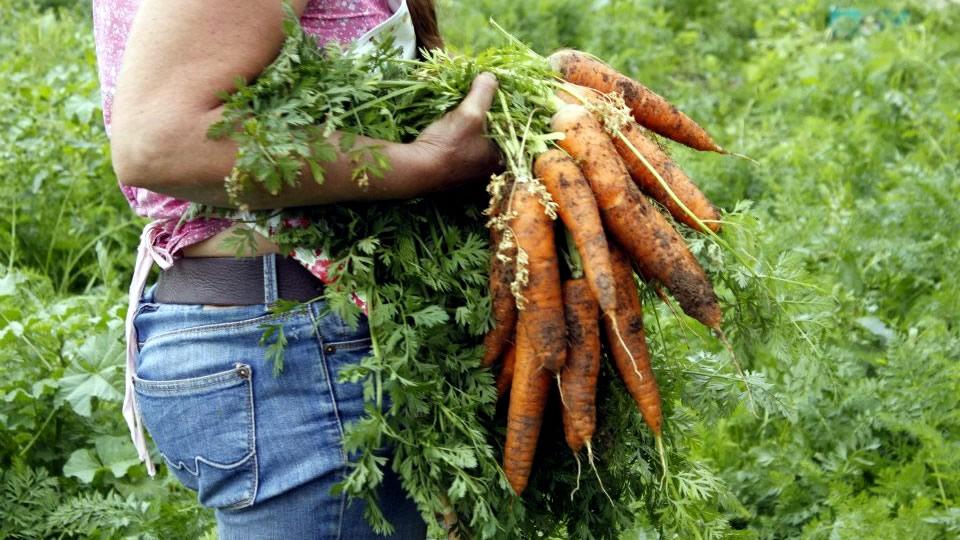 inicio-la-zanahoria-2